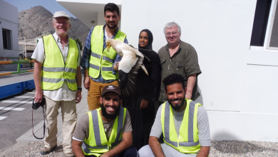 Photo of Oman looks to contribute to global vulture conservation efforts