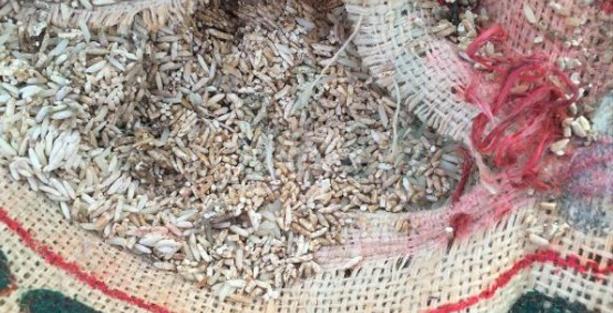 Photo of استئناف الرستاق تسدل الستار على قضية الأرز المغشوش وتصدر حكمها
