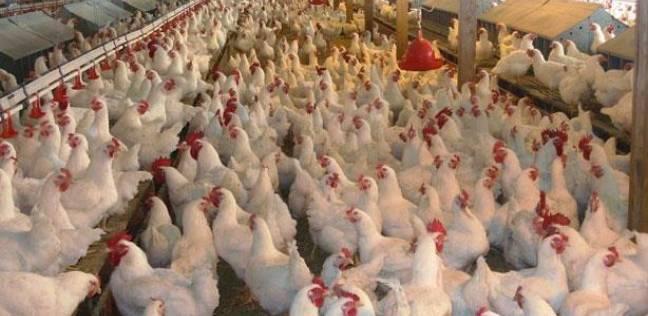 Photo of قرار جديد بحظر استيراد الطيور من بعض الدول