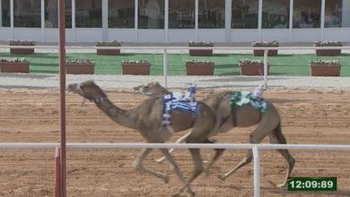"Photo of في مهرجان بالسعودية: ""سمهرم"" تقلب الموازين في الأمتار الأخيرة وتفوز بالرمز الذهبي"