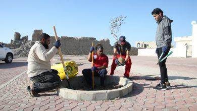 "Photo of بالصور: شبابٌ يُشجّرون بلدة اليَمَن بـ ""السِّدر العُمانية"""
