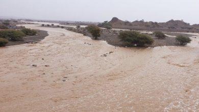 Photo of الأودية حاضرة: أمطار الخير تهطل على عدد من الولايات
