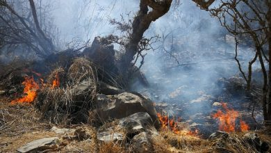 Photo of بالصور: حريق يلتهم الكثير من الأشجار و الحشائش برخيوت