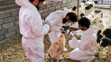 Photo of بعد إصابة شخصين بحمى القرم: حجر طبي على مزرعة في سمائل