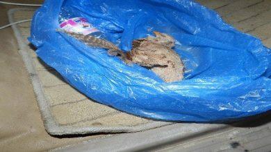 Photo of بالصور: القبض على أشخاص انتهكوا الحياة البرية في ظفار