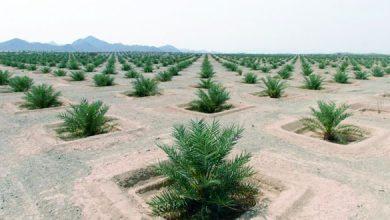 Photo of تنمية نخيل عمان تعلن عن وظائف للعمانيين